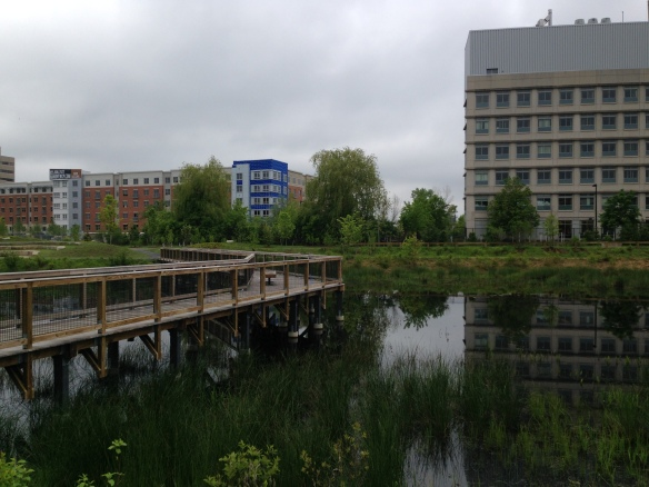 Looking across the newly constructed stormwater wetlands toward Cambridge Park Drive where 1,562 apartments will be.